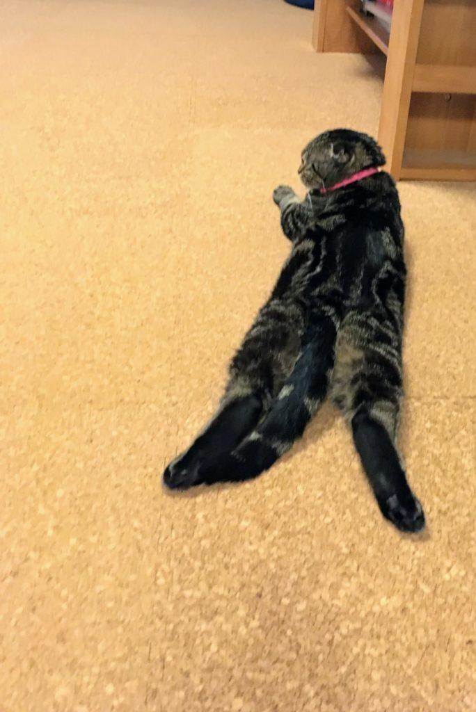 コルクマットの上に寝そべっている猫