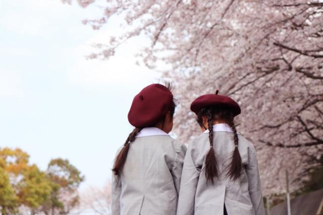 入園式の桜と女の子2人
